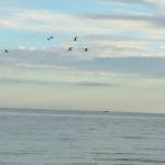 Mein Blog aus der Vogelperspektive
