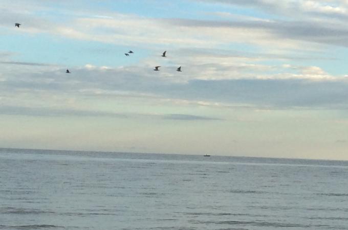 mein-blog-aus-der-vogelperspektive